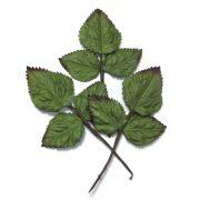 Веточка с листьями 55х60 мм